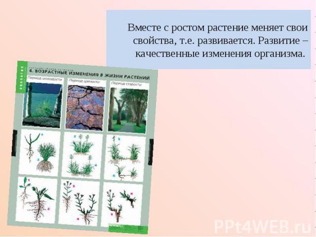 Вместе с ростом растение меняет свои свойства, т.е. развивается. Развитие – качественные изменения организма.