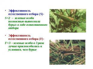 Эффективность естественного отбора (S)-S=2 → зеленые особи полностью вытеснили б