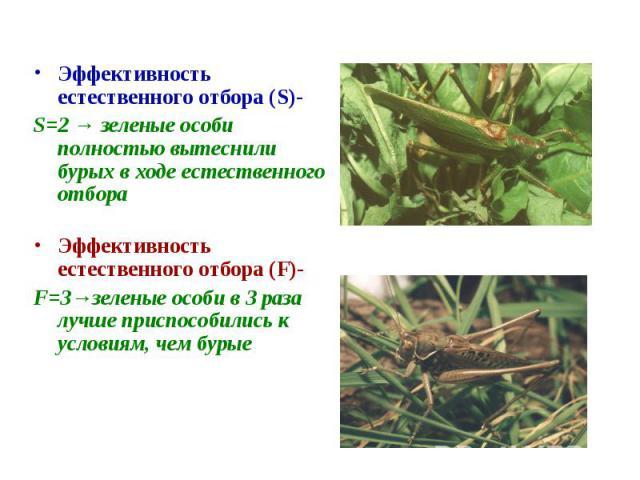 Эффективность естественного отбора (S)-S=2 → зеленые особи полностью вытеснили бурых в ходе естественного отбораЭффективность естественного отбора (F)-F=3→зеленые особи в 3 раза лучше приспособились к условиям, чем бурые