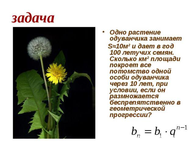 задача Одно растение одуванчика занимает Ѕ≈10м² и дает в год 100 летучих семян. Сколько км² площади покроет все потомство одной особи одуванчика через 10 лет, при условии, если он размножается беспрепятственно в геометрической прогрессии?