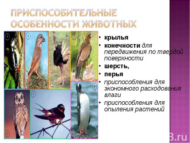 Приспособительные особенности животных крыльяконечности для передвижения по твердой поверхностишерсть,перьяприспособления для экономного расходования влаги приспособления для опыления растений