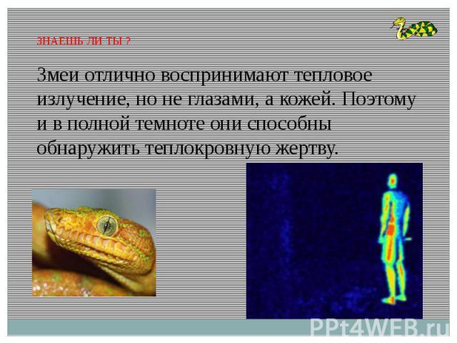 ЗНАЕШЬ ЛИ ТЫ ?Змеи отлично воспринимают тепловое излучение, но не глазами, а кожей. Поэтому и в полной темноте они способны обнаружить теплокровную жертву.