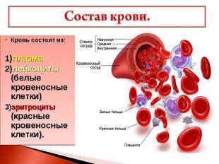 Состав крови. Кровь состоит из: 1)плазма 2)лейкоциты (белые кровеносные клетки)