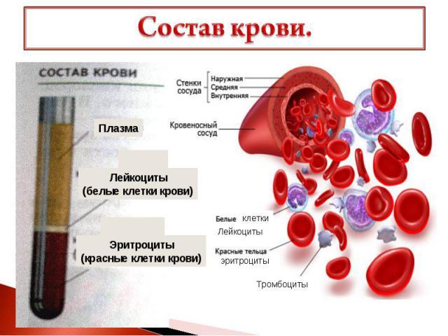 Состав крови.