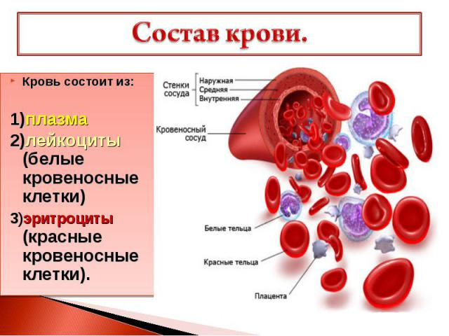 Состав крови. Кровь состоит из: 1)плазма 2)лейкоциты (белые кровеносные клетки) 3)эритроциты (красные кровеносные клетки).