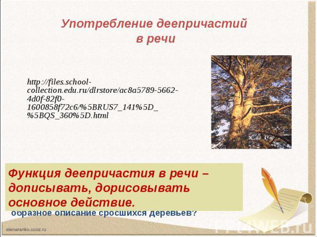Употребление деепричастий в речи http://files.school-collection.edu.ru/dlrstore/ac8a5789-5662-4d0f-82f0-1600858f72c6/%5BRUS7_141%5D_%5BQS_360%5D.html Функция деепричастия в речи – дописывать, дорисовывать основное действие.