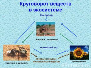 Круговорот веществв экосистеме
