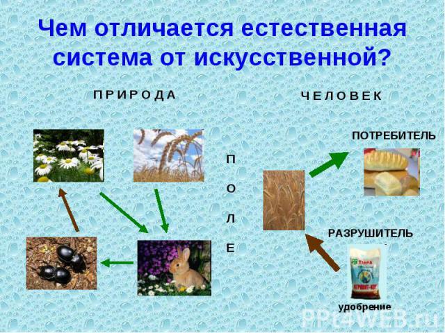 Чем отличается естественная система от искусственной?