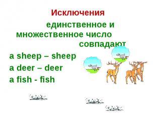 Исключения единственное и множественное число совпадаютa sheep – sheepa deer – d