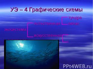УЭ – 4 Графические схемы тундра естественная океанэкосистема искусственная аквар