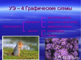 УЭ – 4 Графические схемы растительность биоценоз животное населениебиогеоценоз м