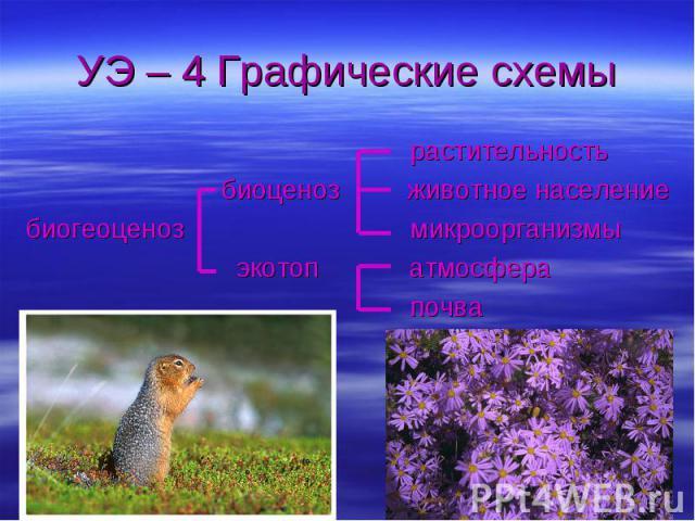 УЭ – 4 Графические схемы растительность биоценоз животное населениебиогеоценоз микроорганизмы экотоп атмосфера почва