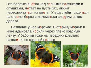 Эта бабочка вьется над лесными полянками и опушками, летает на пустырях, любит п