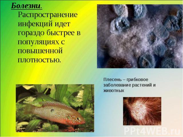 Болезни. Распространение инфекций идет гораздо быстрее в популяциях с повышенной плотностью. Плесень – грибковое заболевание растений и животных