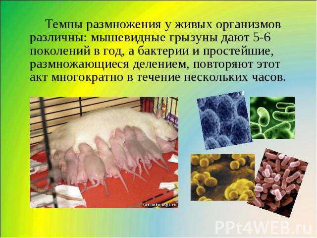 Темпы размножения у живых организмов различны: мышевидные грызуны дают 5-6 поколений в год, а бактерии и простейшие, размножающиеся делением, повторяют этот акт многократно в течение нескольких часов.