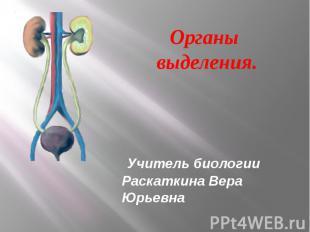 Органы выделения Учитель биологии Раскаткина Вера Юрьевна