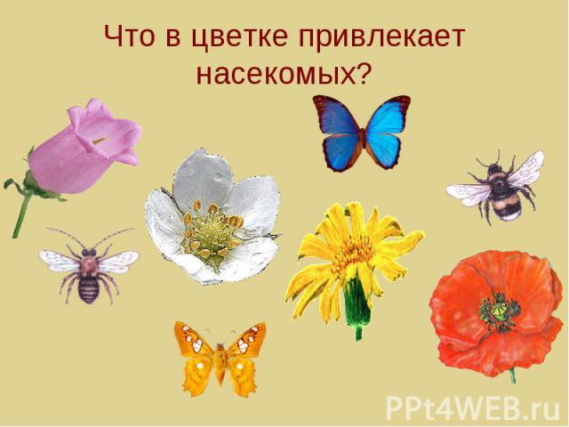 Что в цветке привлекает насекомых?