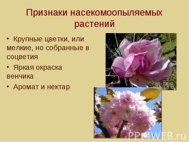 Признаки насекомоопыляемых растений Крупные цветки, или мелкие, но собранные в соцветия Яркая окраска венчика Аромат и нектар