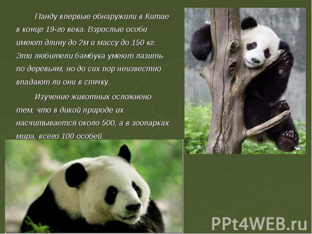 Панду впервые обнаружили в Китае в конце 19-го века. Взрослые особи имеют длину до 2м и массу до 150 кг. Эти любители бамбука умеют лазить по деревьям, но до сих пор неизвестно впадают ли они в спячку.Изучение животных осложнено тем, что в дикой при…