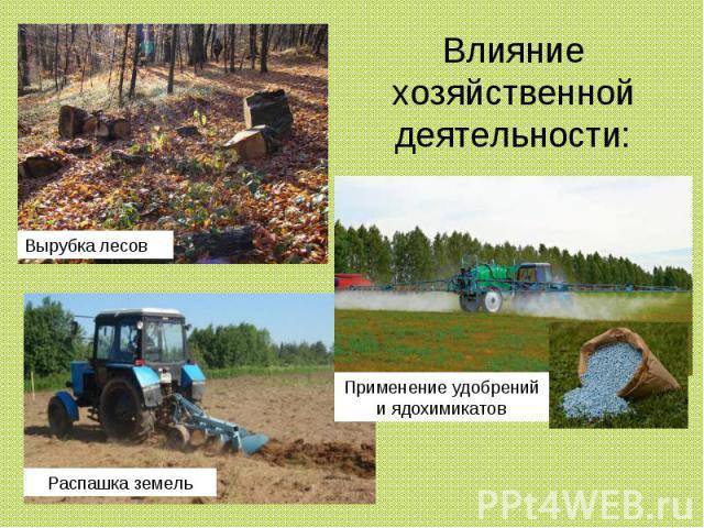 Влияние хозяйственной деятельности: Вырубка лесов Применение удобрений и ядохимикатов Распашка земель