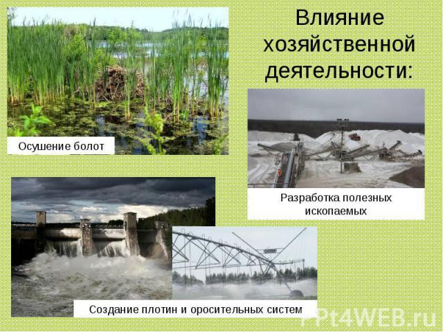 Влияние хозяйственной деятельности: Осушение болот Разработка полезных ископаемых Создание плотин и оросительных систем