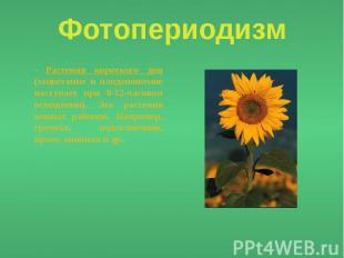 Фотопериодизм - Растения короткого дня (зацветание и плодоношение наступает при