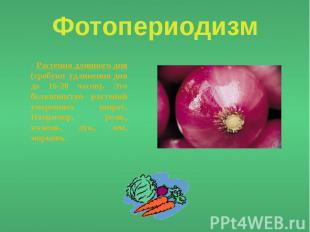 Фотопериодизм - Растения длинного дня (требуют удлинения дня до 16-20 часов). Эт