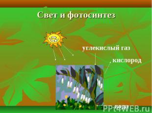 Свет и фотосинтез углекислый газкислород