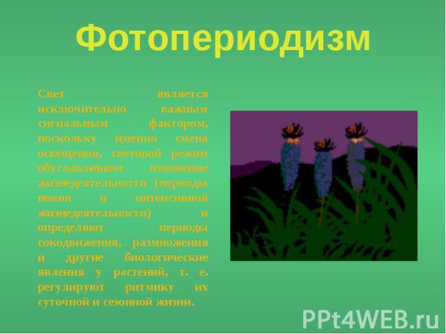 Фотопериодизм Свет является исключительно важным сигнальным фактором, поскольку именно смена освещения, световой режим обуславливают изменение жизнедеятельности (периоды покоя и интенсивной жизнедеятельности) и определяют периоды сокодвижения, размн…