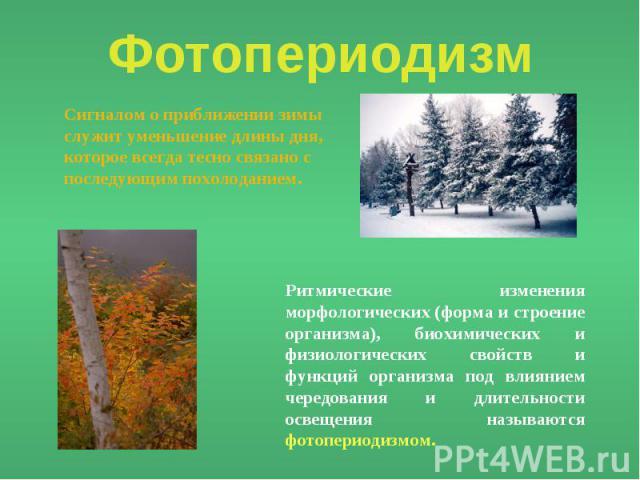 Фотопериодизм Сигналом о приближении зимы служит уменьшение длины дня, которое всегда тесно связано с последующим похолоданием. Ритмические изменения морфологических (форма и строение организма), биохимических и физиологических свойств и функций орг…