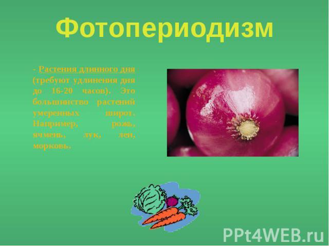 Фотопериодизм - Растения длинного дня (требуют удлинения дня до 16-20 часов). Это большинство растений умеренных широт. Например, рожь, ячмень, лук, лен, морковь.