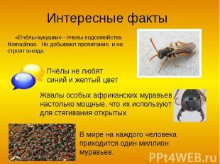 Интересные факты «Пчёлы-кукушки» - пчелы подсемейства Nomadinae. Не добывают про