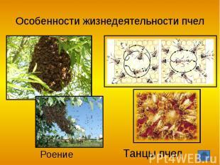 Особенности жизнедеятельности пчел