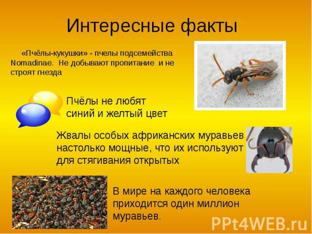 Интересные факты «Пчёлы-кукушки» - пчелы подсемейства Nomadinae. Не добывают пропитание и не строят гнезда Пчёлы не любят синий и желтый цвет Жвалы особых африканских муравьев настолько мощные, что их используют для стягивания открытых В мире на каж…