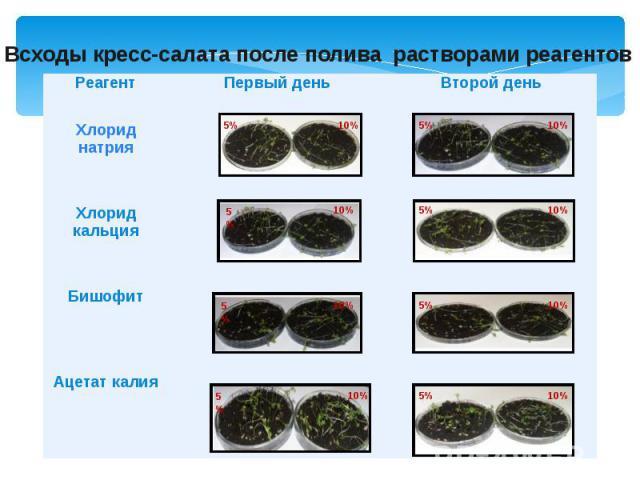 Всходы кресс-салата после полива растворами реагентов