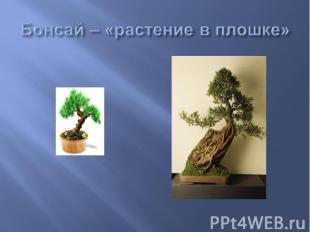 Бонсай – «растение в плошке»