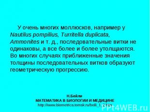 У очень многих моллюсков, например у Nautilus pompilius, Turritella duplicata, A