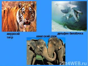 амурский тигр азиатский слон дельфин белобочка