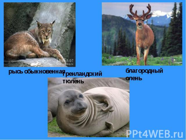 рысь обыкновенная гренландский тюлень благородный олень