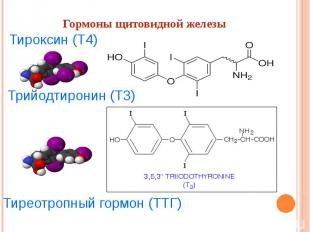 Гормоны щитовидной железы Тироксин(Т4) Трийодтиронин(Т3) Тиреотропный гормон