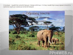 Слоновые- семействомлекопитающихотрядахоботных. К этому семейству в наше вре