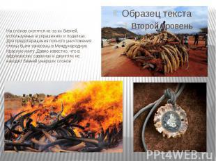На слонов охотятся из-за ихбивней, используемых в украшениях и поделках. Для пр