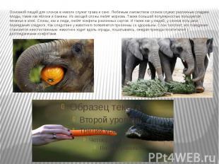 Основной пищей для слонов в неволе служат трава и сено. Любимым лакомством слоно