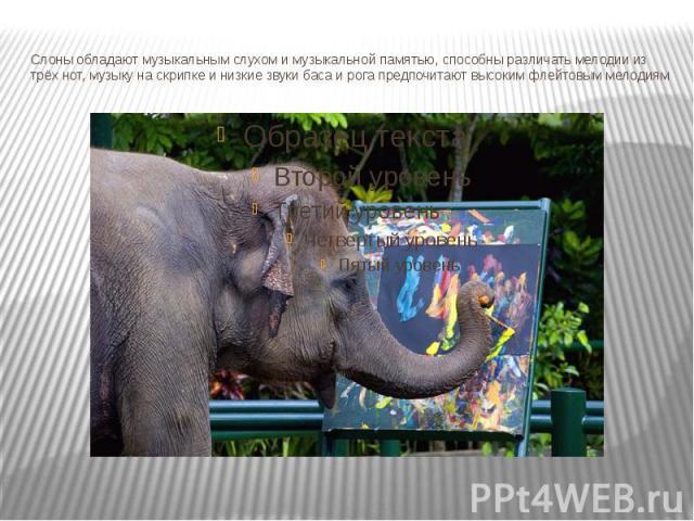 Слоны обладают музыкальным слухом и музыкальной памятью, способны различать мелодии из трёх нот, музыку на скрипке и низкие звуки баса и рога предпочитают высоким флейтовым мелодиям