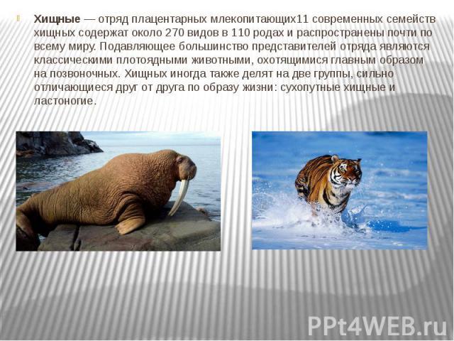 Хищные— отрядплацентарных млекопитающих11 современных семейств хищных содержат около 270 видов в 110 родах и распространены почти по всему миру. Подавляющее большинство представителей отряда являются классическимиплотояднымиживотными, охотящимис…