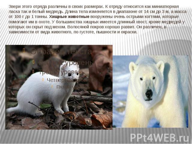 Звери этого отряда различны в своих размерах. К отряду относится как миниатюрная ласка так и белый медведь. Длина тела изменяется в диапазоне от 14 см до 3 м, а масса от 100 г до 1 тонны.Хищные животныевооружены очень острыми когтями, которые помо…