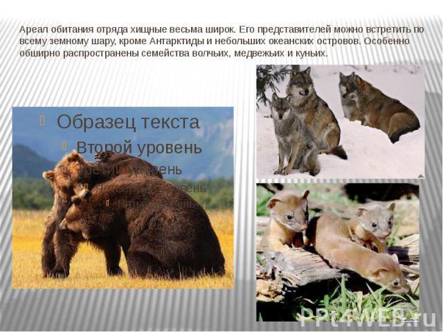 Ареал обитания отряда хищные весьма широк. Его представителей можно встретить по всему земному шару, кроме Антарктиды и небольших океанских островов. Особенно обширно распространены семейства волчьих, медвежьих и куньих.