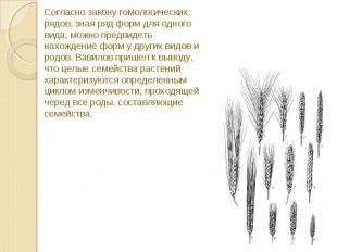 Согласно закону гомологических рядов, зная ряд форм для одного вида, можно предв