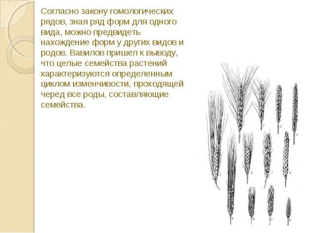 Согласно закону гомологических рядов, зная ряд форм для одного вида, можно предвидеть нахождение форм у других видов и родов. Вавилов пришел к выводу, что целые семейства растений характеризуются определенным циклом изменчивости, проходящей черед вс…