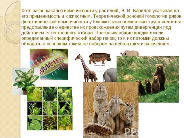 Хотя закон касался изменчивости у растений, Н. И. Вавилов указывал на его применимость и к животным. Теоретической основой гомологии рядов фенотипической изменчивости у близких таксономических групп является представление о единстве их происхождения…